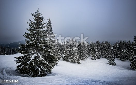 Winter mountain landscape with snowy fir.  Winter mountain trail on a sunny day.