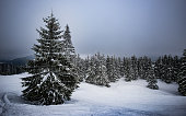 Winter mountain landscape with snowy fir. \nWinter mountain trail on a sunny day.