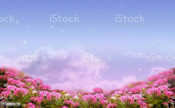 Fantasy background of morning sky with stars clouds and rose flowers picture id1153688729?b=1&k=6&m=1153688729&s=612x612&h=g44uvrs4vux8vlyvz0311 0aipmuhb fzezteyi6 ko=