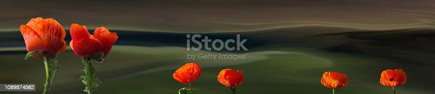 1135260918 istock photo Fantasy composition of oriental poppies 1089874562