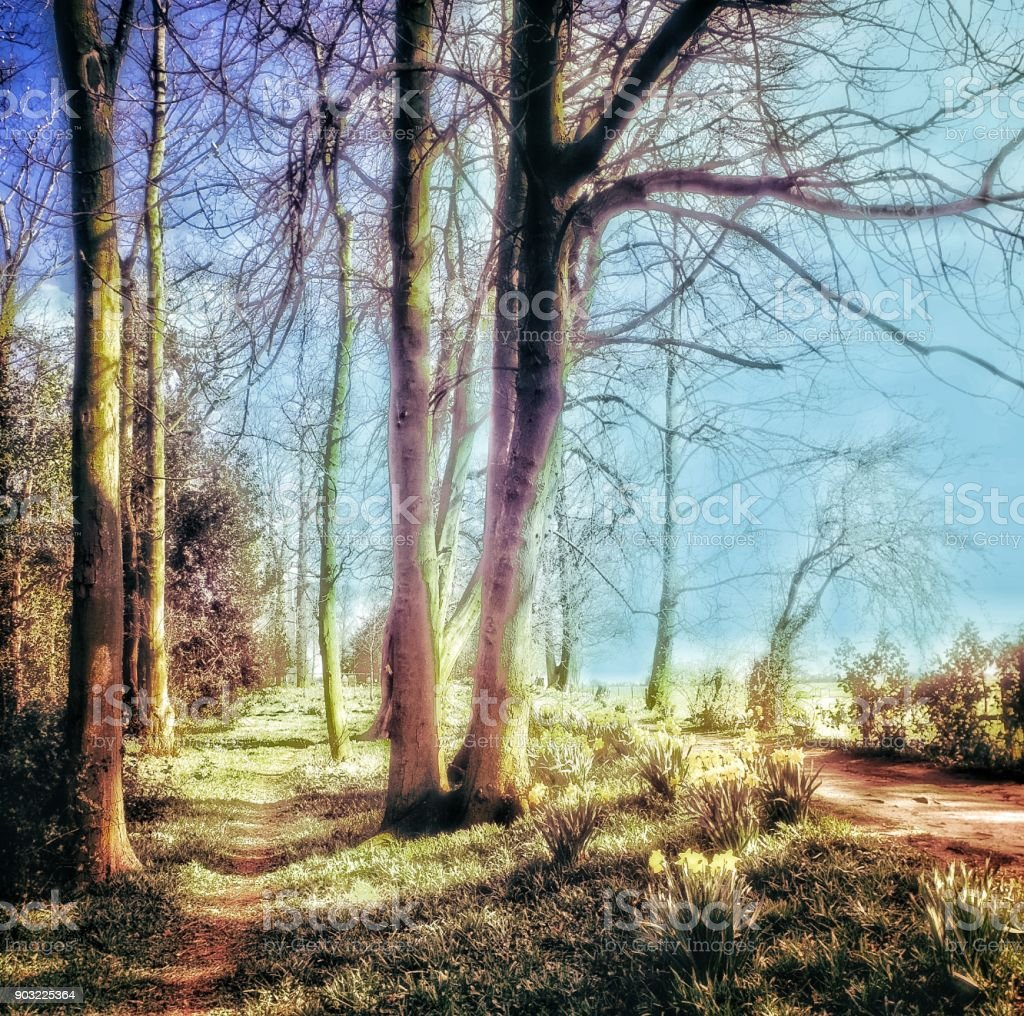 fantasy filtered dream like images - soft focus hallucination day...