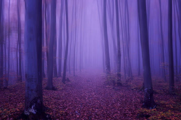 Fantasy Forest abstrakten Hintergrund, ultra Violet Konzept - Farbe des Jahres 2018 – Foto