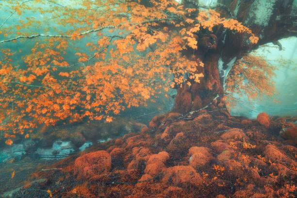 bosque de fantasía en otoño con una corriente - foto de stock