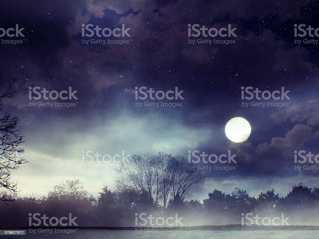 Fantasy forest stock photo