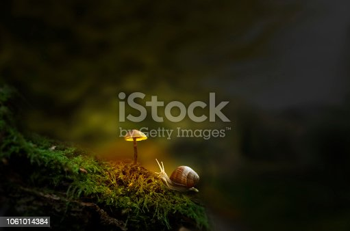 Snail crawling to mushroom in green moss, dark woodland. Fantasy forest with slug and glowing mushroom. Small wonder world, summer dreams illustration wallpaper