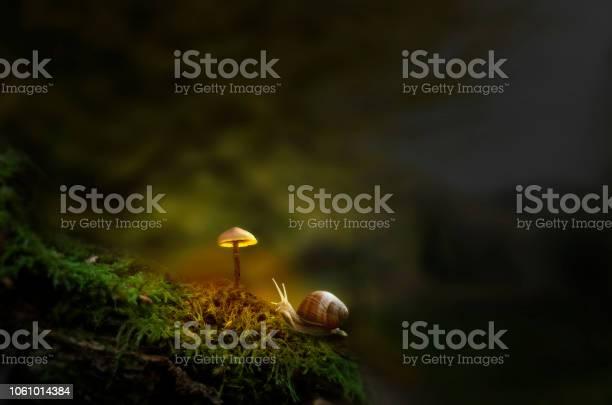 Fantasy forest with slug and glowing mushroom picture id1061014384?b=1&k=6&m=1061014384&s=612x612&h=nsfabuwgsmuafm2u0hb2heyyqhvukh6cdm256hvauma=