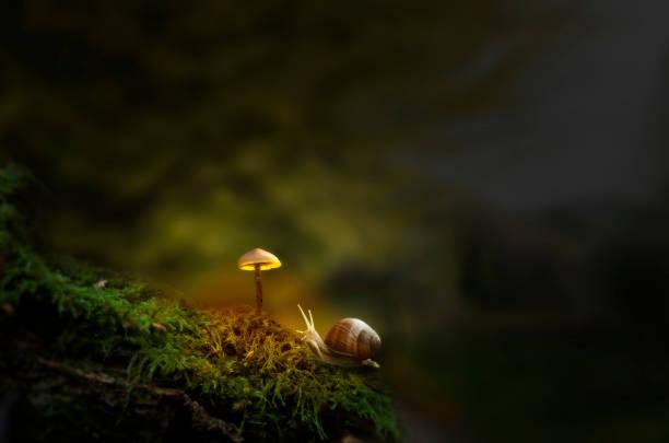 fantasy forest with slug and glowing mushroom - ślimak gastropoda zdjęcia i obrazy z banku zdjęć