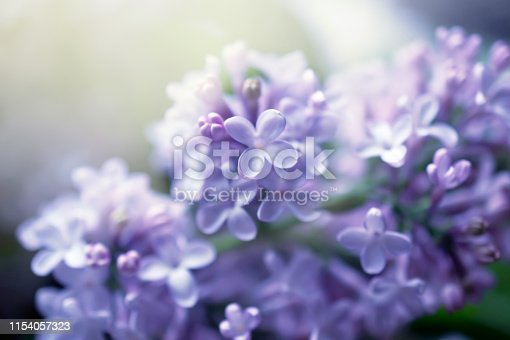 Fantasy lilacs flowers close-up on blurred background with soft focus effect. For this photo applied blurring.