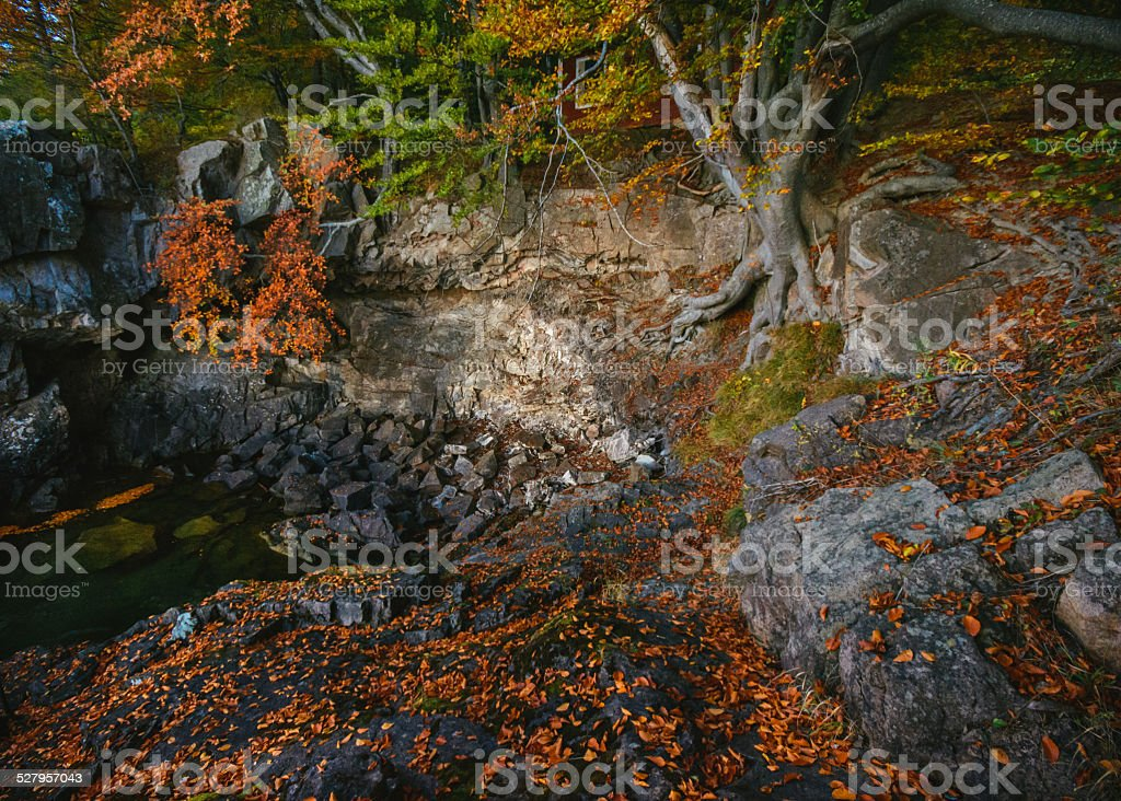 Fantasy location with tree roots and rocks royalty-free stock photo