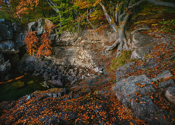 Fantasy location with tree roots and rocks stock photo