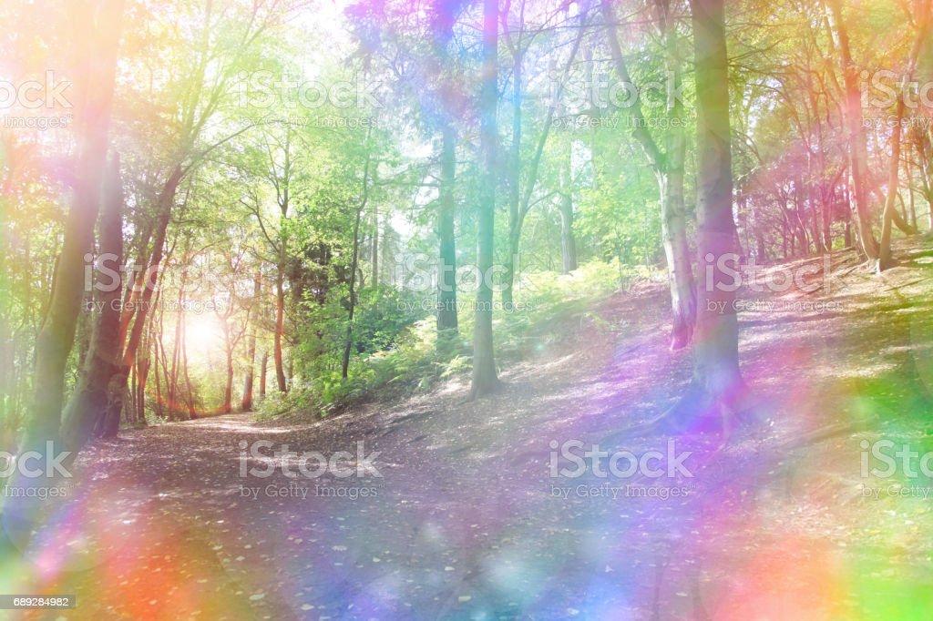 Fantasy rainbow bokeh woodland stock photo