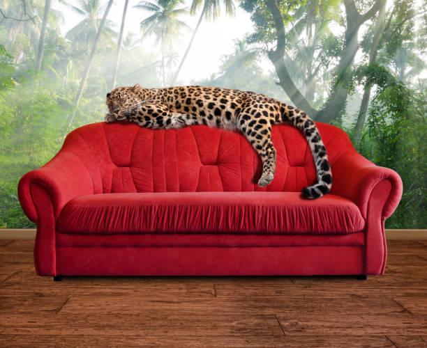 fantasy scene - leopard is sleeping on sofa in jungle wallpaper stock photo