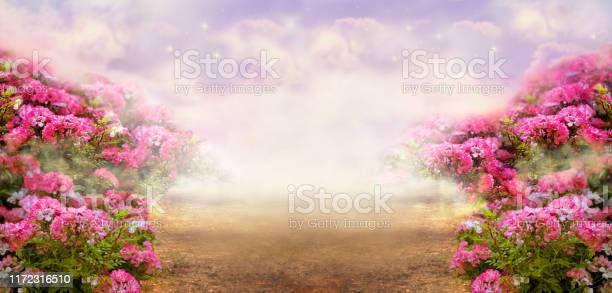 Fantasy summer panoramic photo background with rose field and misty picture id1172316510?b=1&k=6&m=1172316510&s=612x612&h=oxpoasme36t pxjzxqtr7oq7qgrrb jot8fw1pd7bx0=