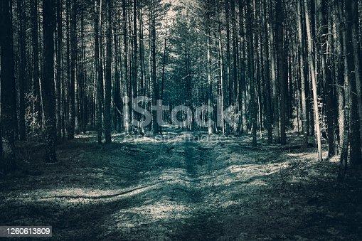 Fantasy turquoise blue light color forest scene background