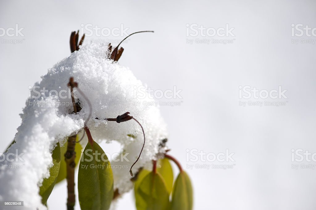 farewell of wintertime royalty-free stock photo