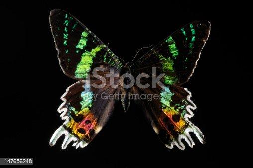 farfalla in controluce