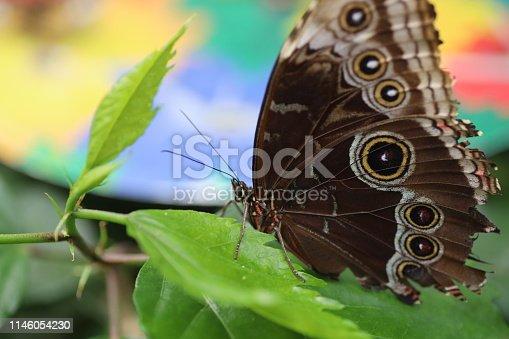 farfalla su pianta