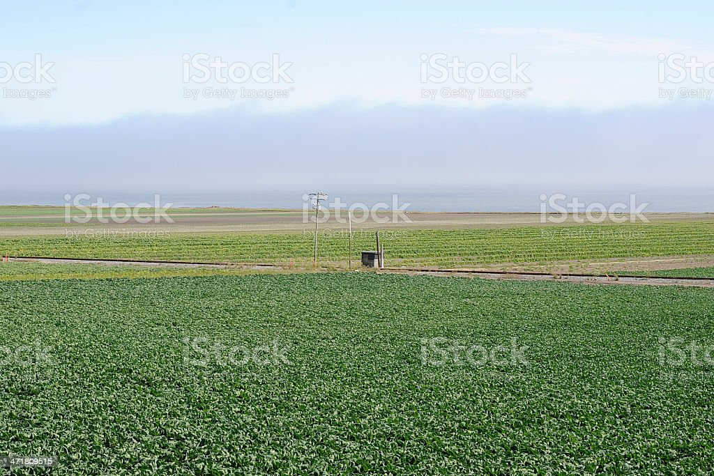 Farm Along Highway 1 California stock photo