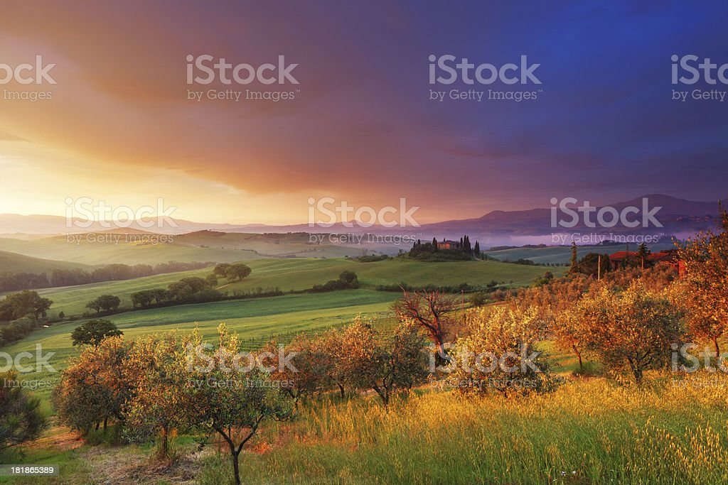 Farm and olive trees in Tuscany at dawn stock photo