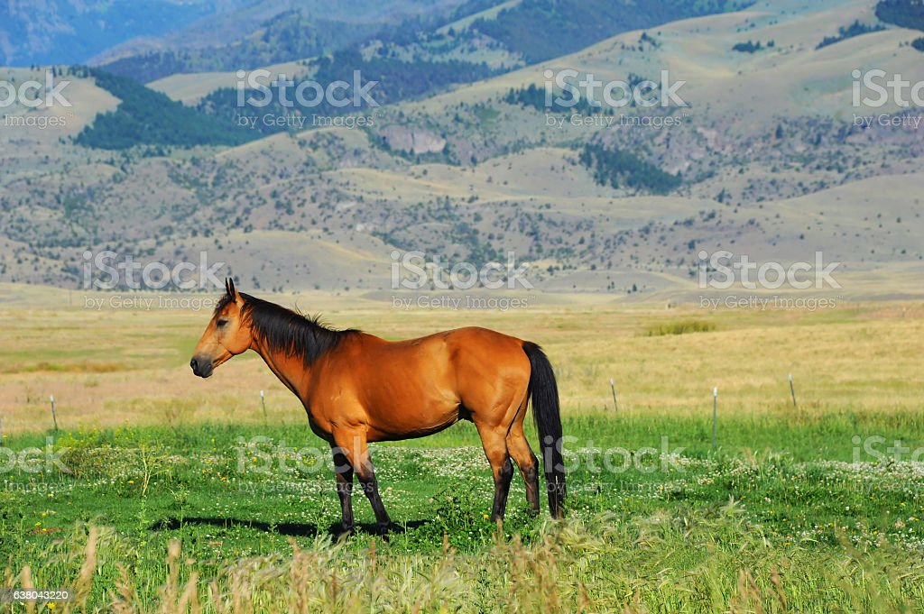 Farm Animal in Paradise Valley stock photo