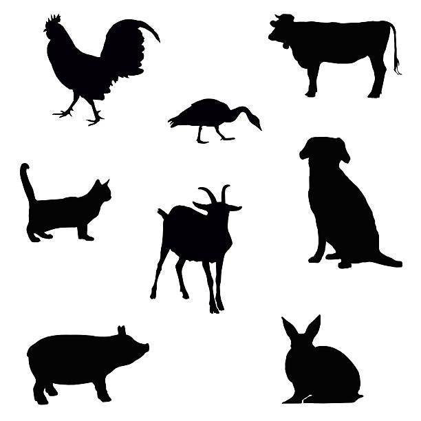 farm animal silhouettes stock photo