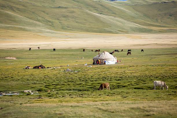 Farm animals pasturing near yurt stock photo