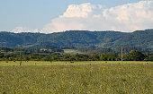 Farm animals. Rural landscape. Farm fields in the pampa biome. Serra general of Brazil. Cumulunimbus clouds.