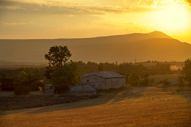 Farm at sunset, Mt Ventoux in the distance stock photo