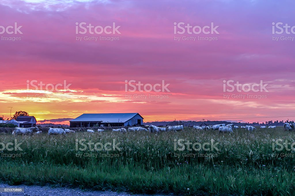 Farm at sunset stock photo