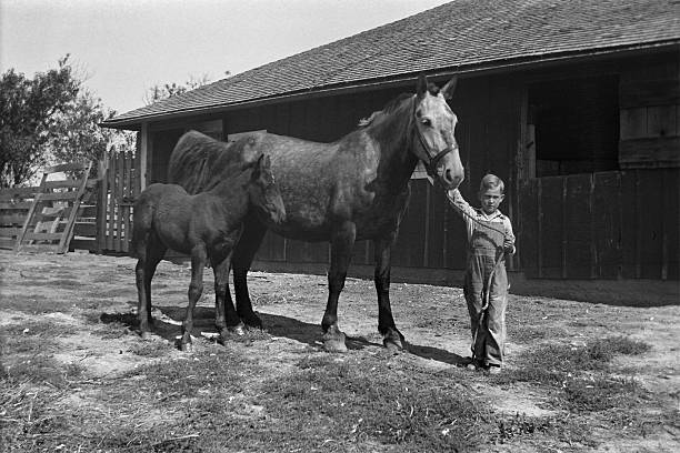 ファーム少年、マーレと子馬 barnyard になった 1935 年、レトロ - 1930~1939年 ストックフォトと画像