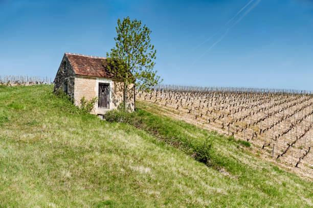 Landwirtschaftliches Gebäude von einem Weinberg – Foto