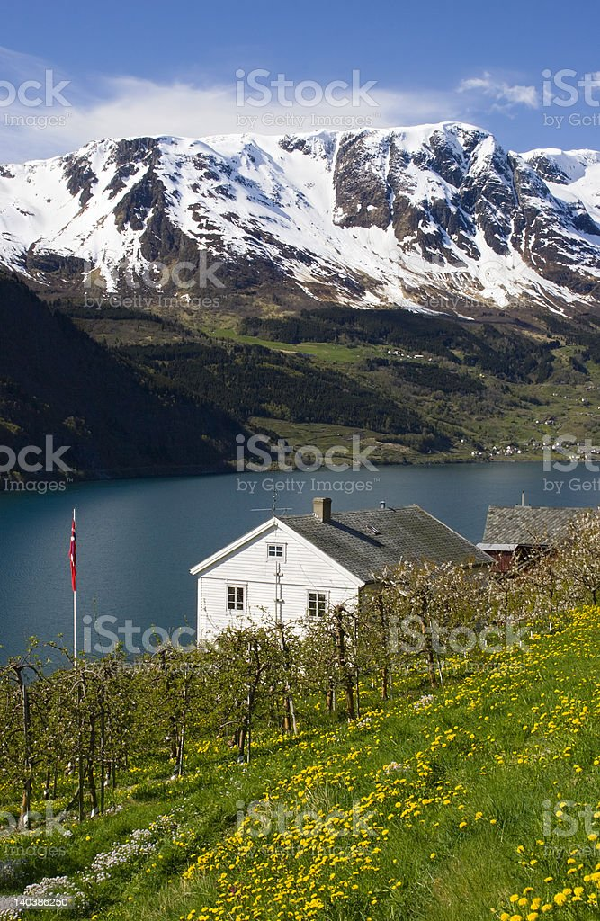 Farm by the fjord stock photo