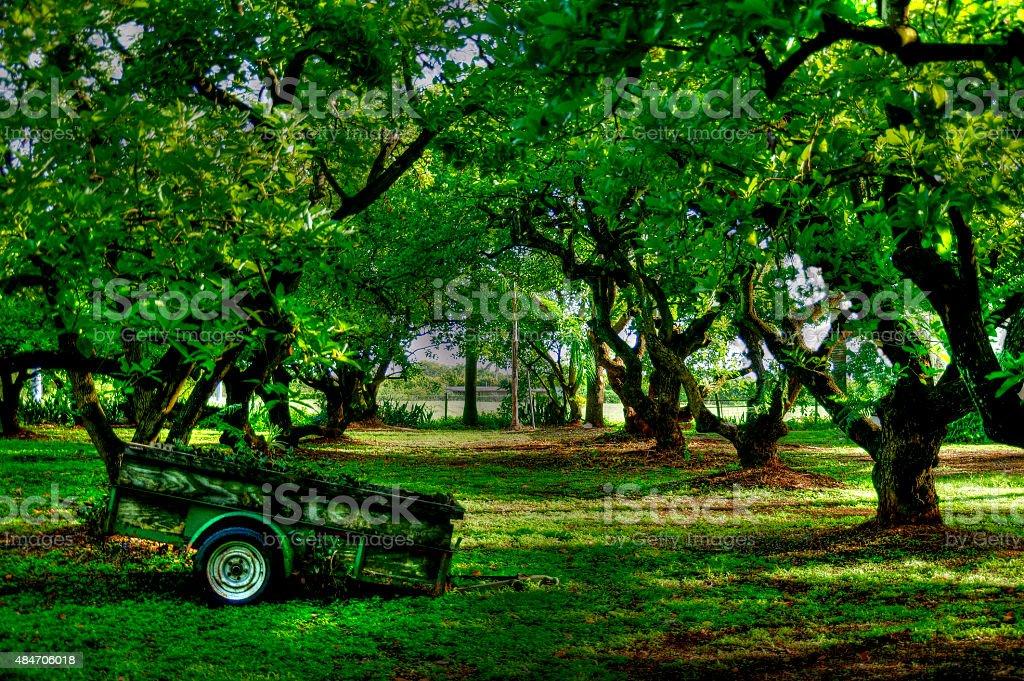 Farm Cartin Avocado Farm stock photo
