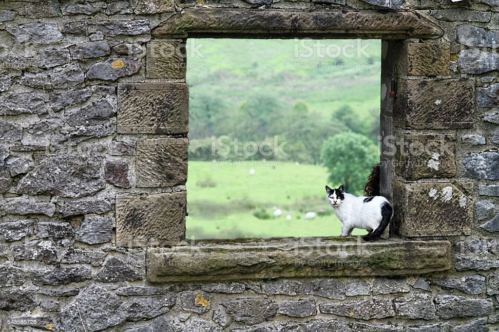 farm cat in barn window stock photo