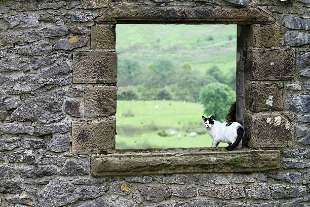 farm cat in barn window stock photo