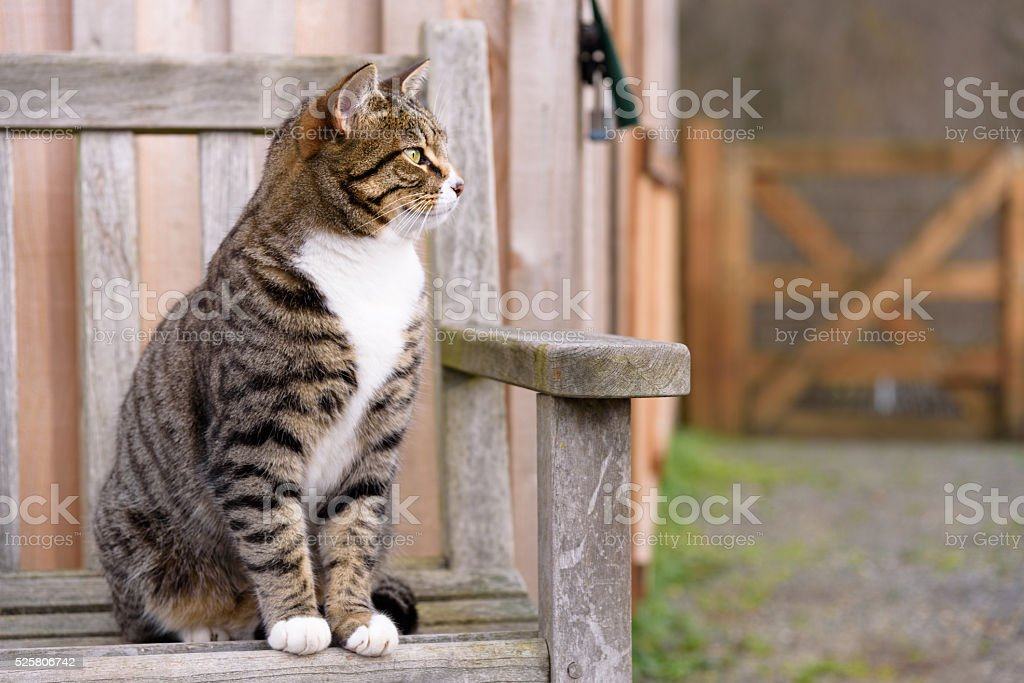 Farm cat keeping watch stock photo