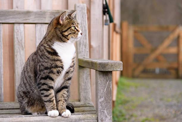 Farm cat keeping watch stock photo