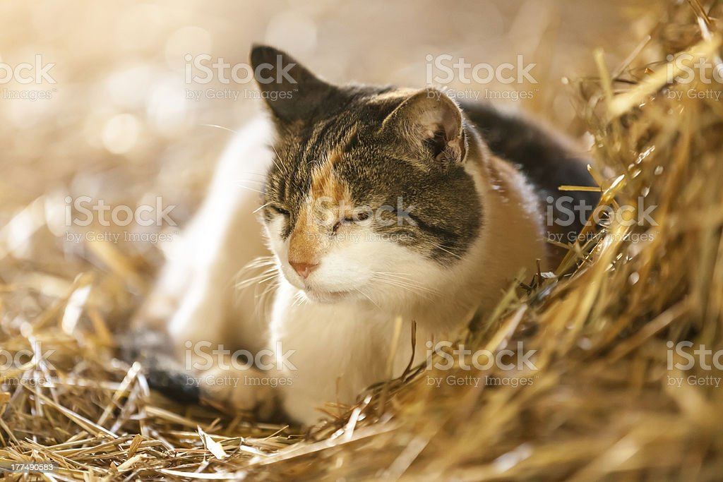 Farm Cat stock photo