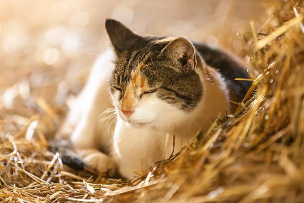 Farm Cat stock photo