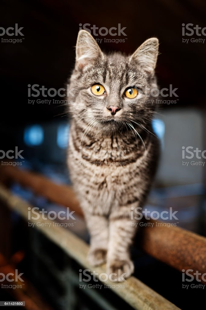 Farm Cat, stock photo