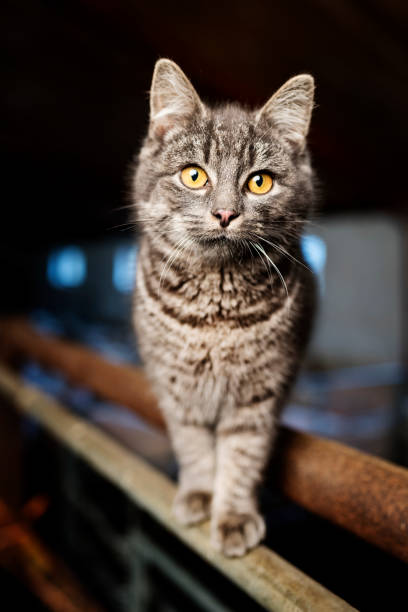 Farm Cat, stock photo