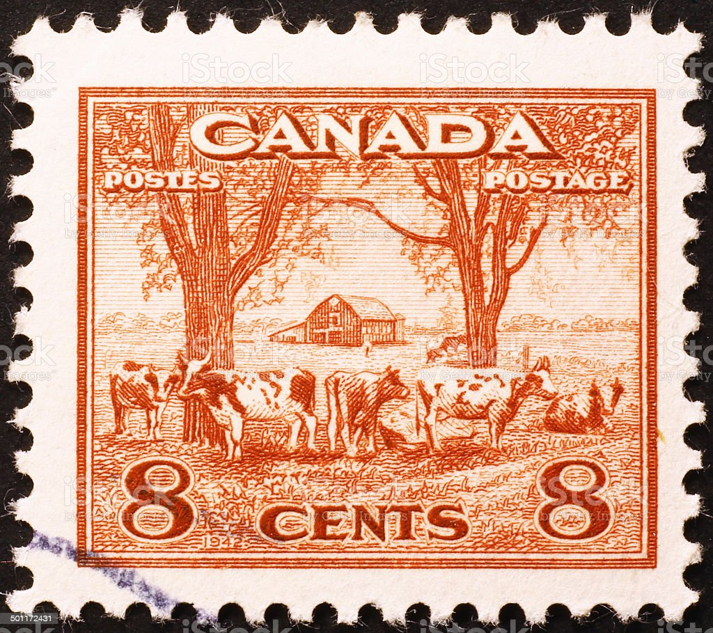 Farm & cows in a vintage canadian stamp stock photo
