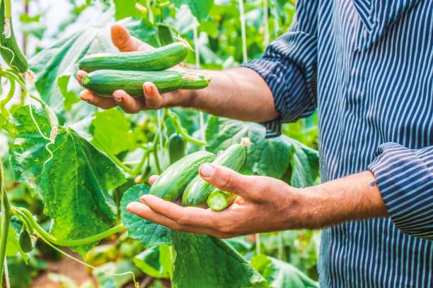 Çiftlik, çiftçi, tarım stok fotoğrafı