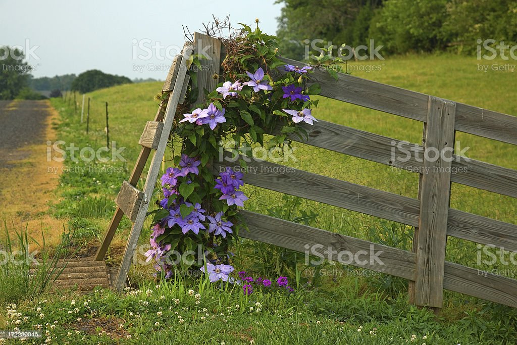 Farm Fence and Flowers royalty-free stock photo