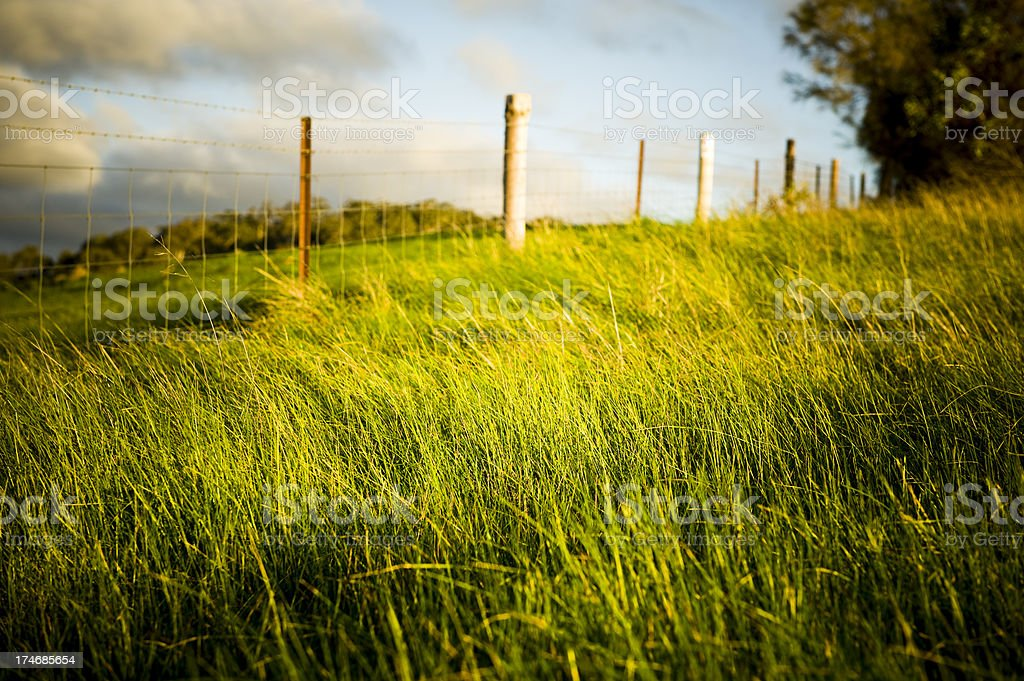 Farm fence hill green grass stock photo