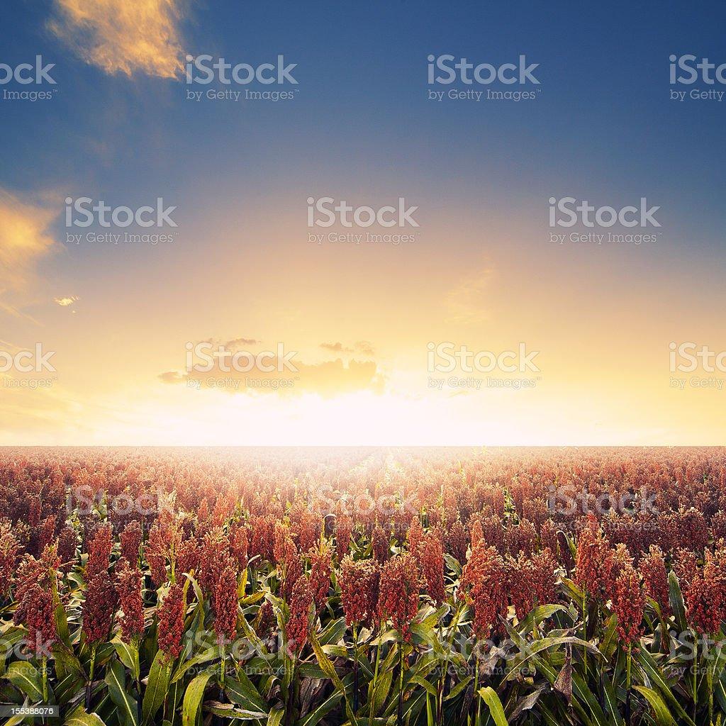 Farm field at sunrise stock photo