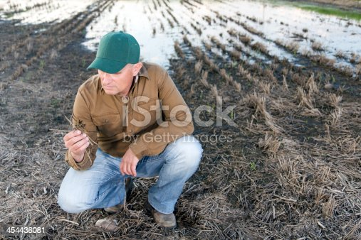 A royalty free image from the farming industry of a disappointed farmer in a flooded field with a ruined crop.
