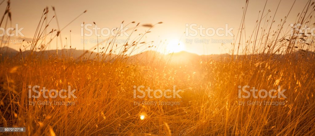 Farm field meadow panoramic path at sunset stock photo