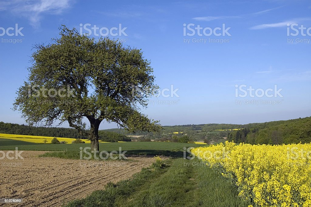 Farm Field royalty-free stock photo