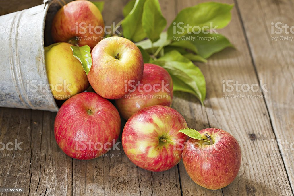 Farm Fresh Apples Pouring From Bucket stock photo
